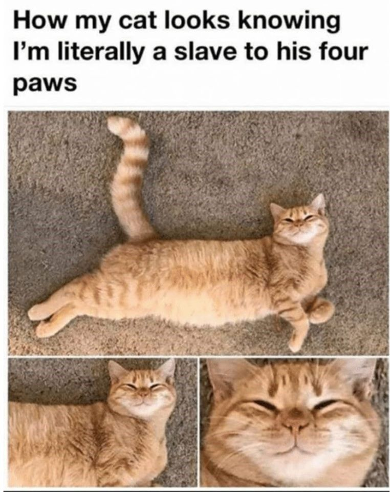 Pin On Cat Funnies 38