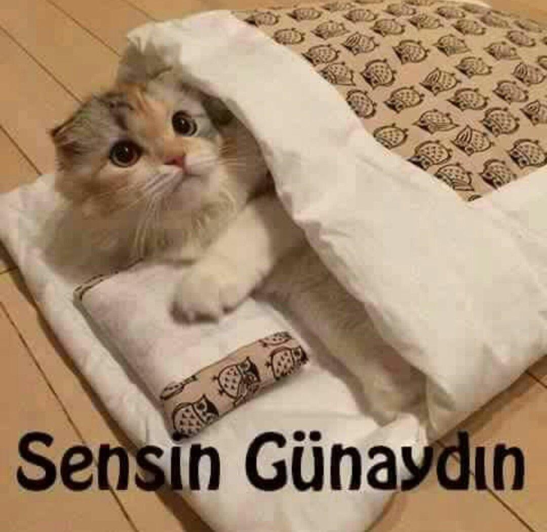 Gülbin Şeker adlı kullanıcının GÜNAYDIN :) panosundaki Pin   Sevimli kedi  yavruları, Sevimli kediler, Yavru kediler