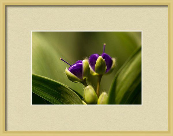 Framed Print featuring the photograph Purple Hearts by Marisela Roman