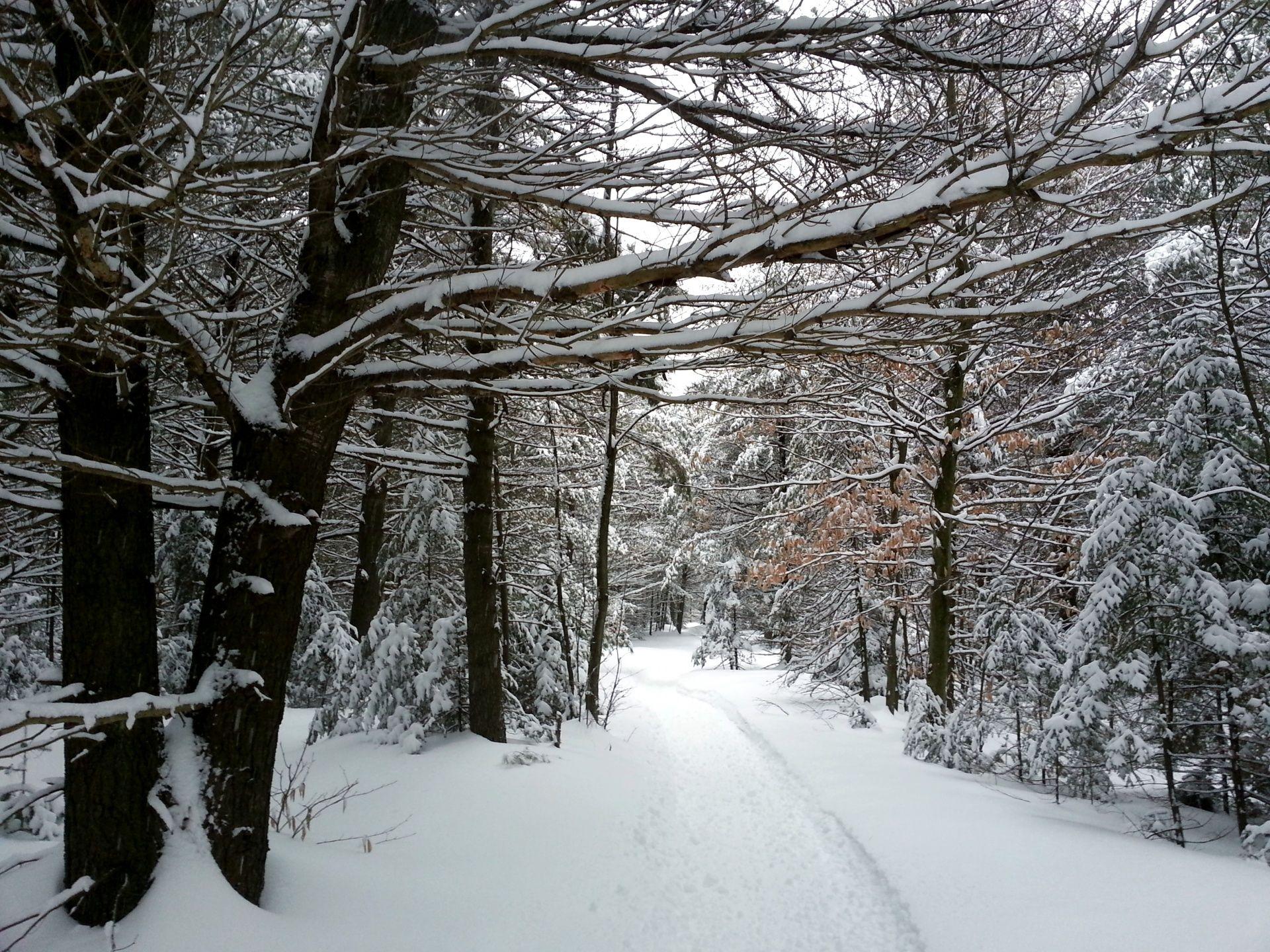 winter landscape stock photo public domain pictures