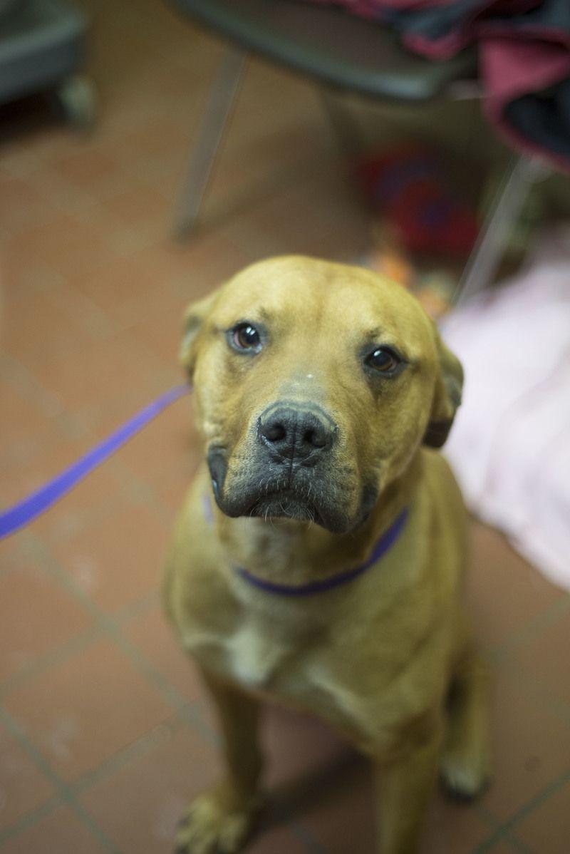 Adopt Iso 2 Warner Adopted On Dog Love Happy Dogs Dog Adoption