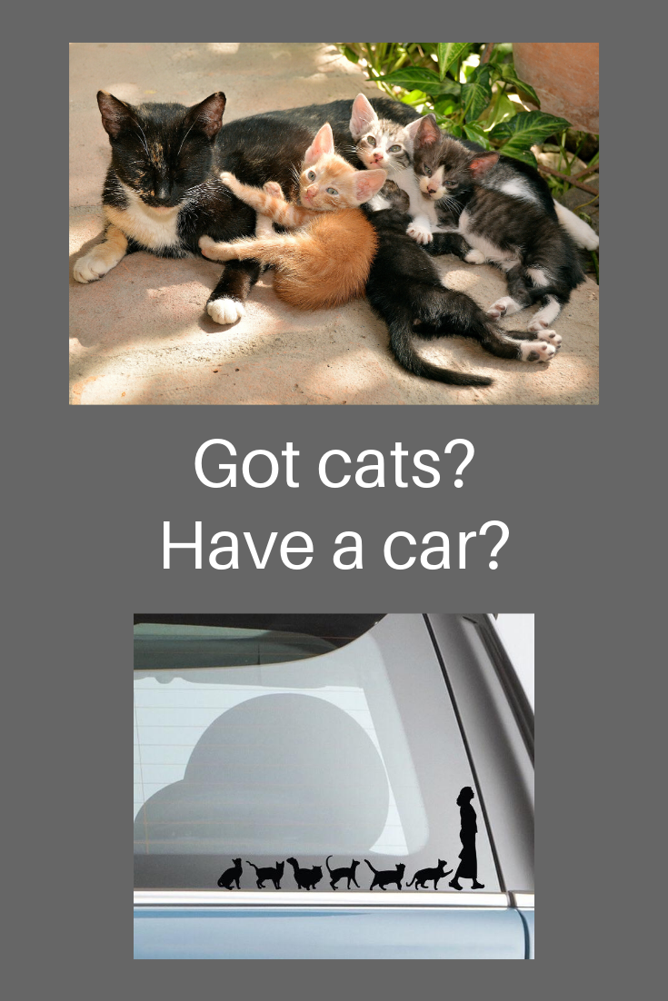 Crazy Cat Lady Car Decal Completely Cat Tastic In 2020 Cats Crazy Cats Crazy Cat Lady [ 1102 x 735 Pixel ]
