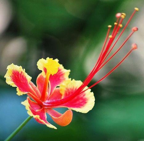 Pin Di Benih Bunga