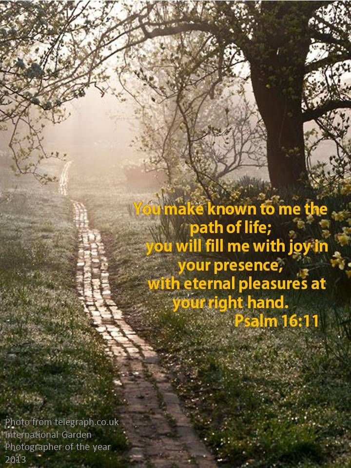 Psalm 1611the Path Of Life Bible Scriptures Pinterest