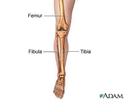 Tibia - tibia /tib·ia/ (tib´e-ah) shin bone; the inner and larger ...