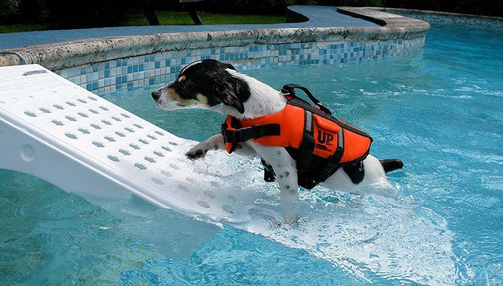 Top 7 Best Dog Pool Ramps Dog Pool Ramp Dog Pool Dog Ramp
