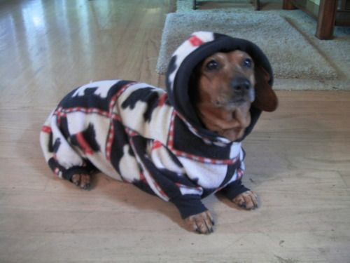 Need These For My Outside Boys During The Winter Dachshund Dog