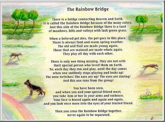 picture about Rainbow Bridge Pet Poem Printable named Pin by way of Becca Whitsell upon the fact Rainbow bridge poem