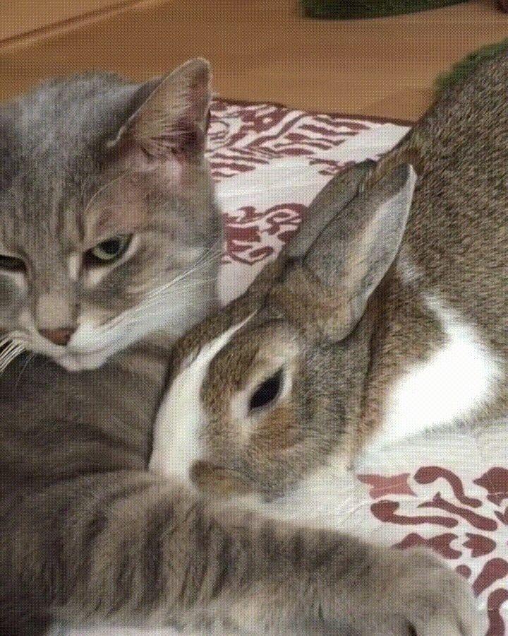 Cat and bunny cuddles. Cat and bunny friends. Cool cats