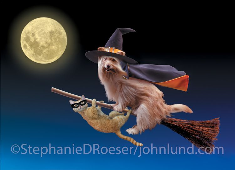 a cat and dog ride a witchs broom in front of a full moon in funny pet halloween picture - Funny Cat Halloween