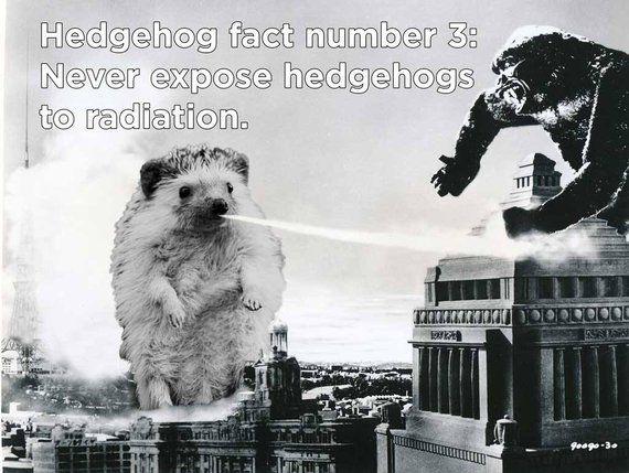 b5c5b6afe Hedgehog T-Shirt: Hedgezilla Battle For Tokyo Movie Poster Funny Hedgehog  Kaija Unisex T-Shirt