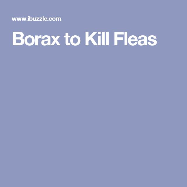 Borax to Kill Fleas