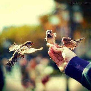 تره العصفور حقه يطير عنده حساس يعرف بل غصن جذاب ومصافح جفوف الفاس Amazing Photography Bird Photography Cute Photography
