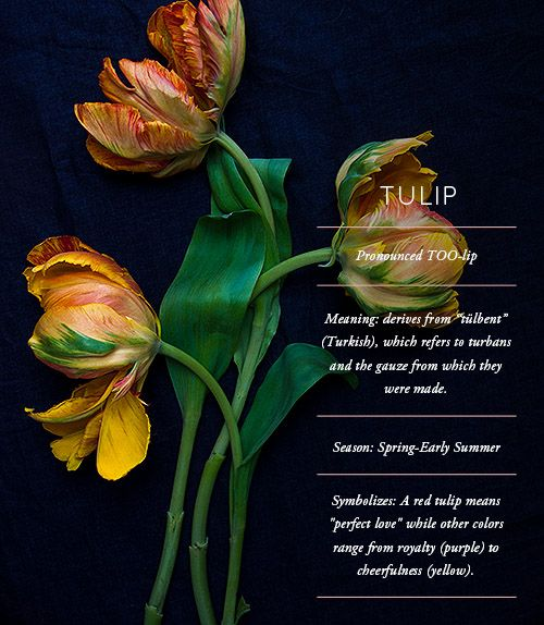 An Entry From Stardust Wanderlust Tulips Types Of Flowers Flower Meanings