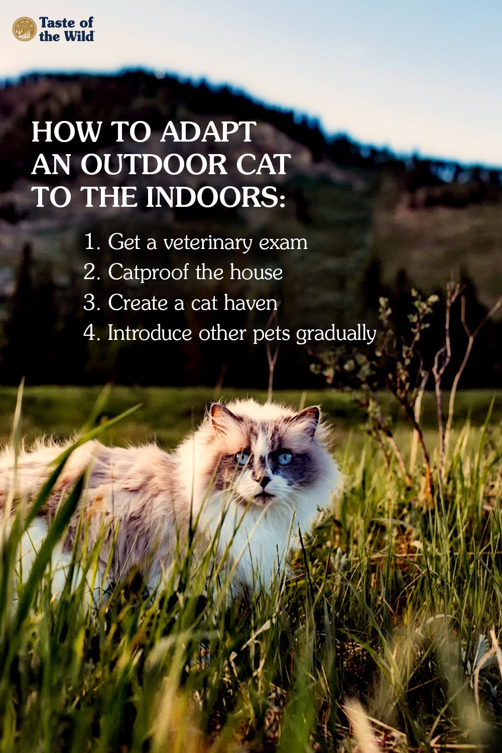 Adapting An Outdoor Cat To The Indoors Outdoor Cats Cats Feral Cats