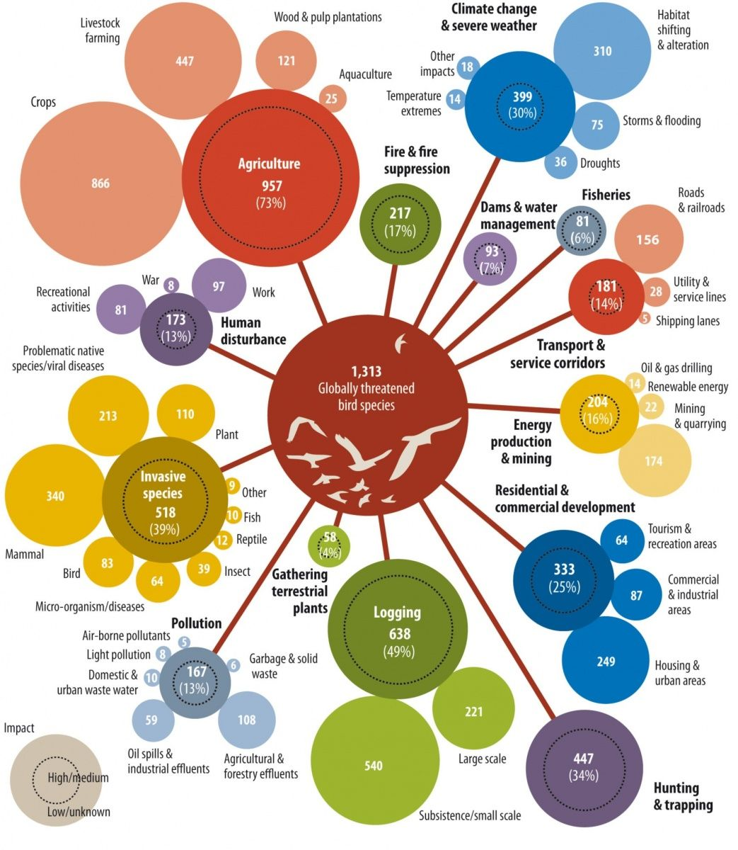 Conservationists Of A Feather Flock Together