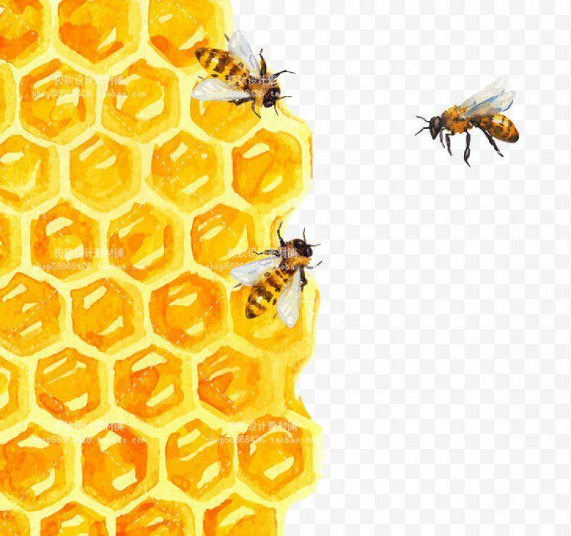 Bee Bee Honeycomb Watercolor Painting Illustration Png Bee Beehive Honey Honey Bee Honeycomb Bee Painting Honey Art Bee Art