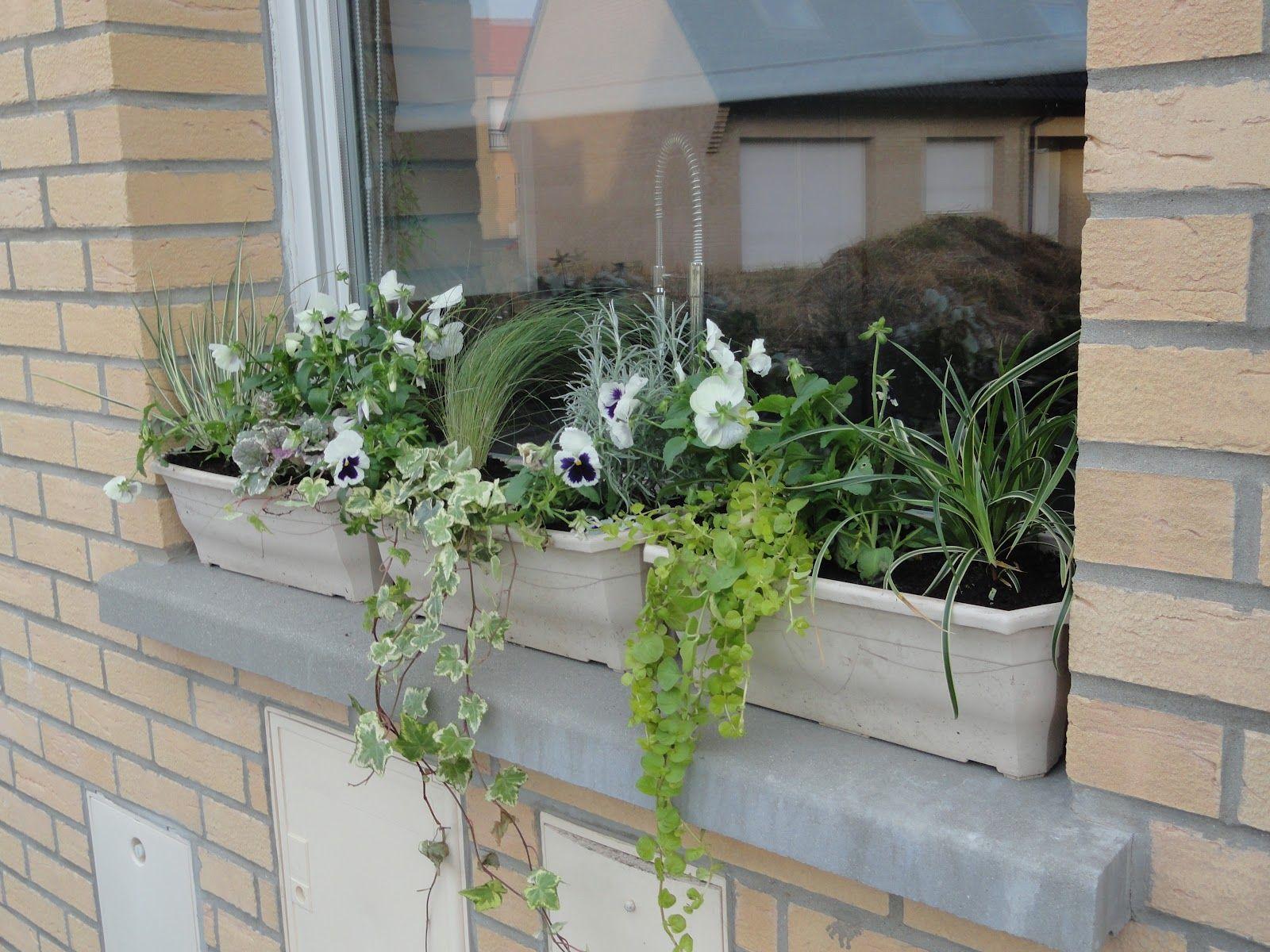 Jardiniere d hiver exterieur Photo de fleur Une pensee