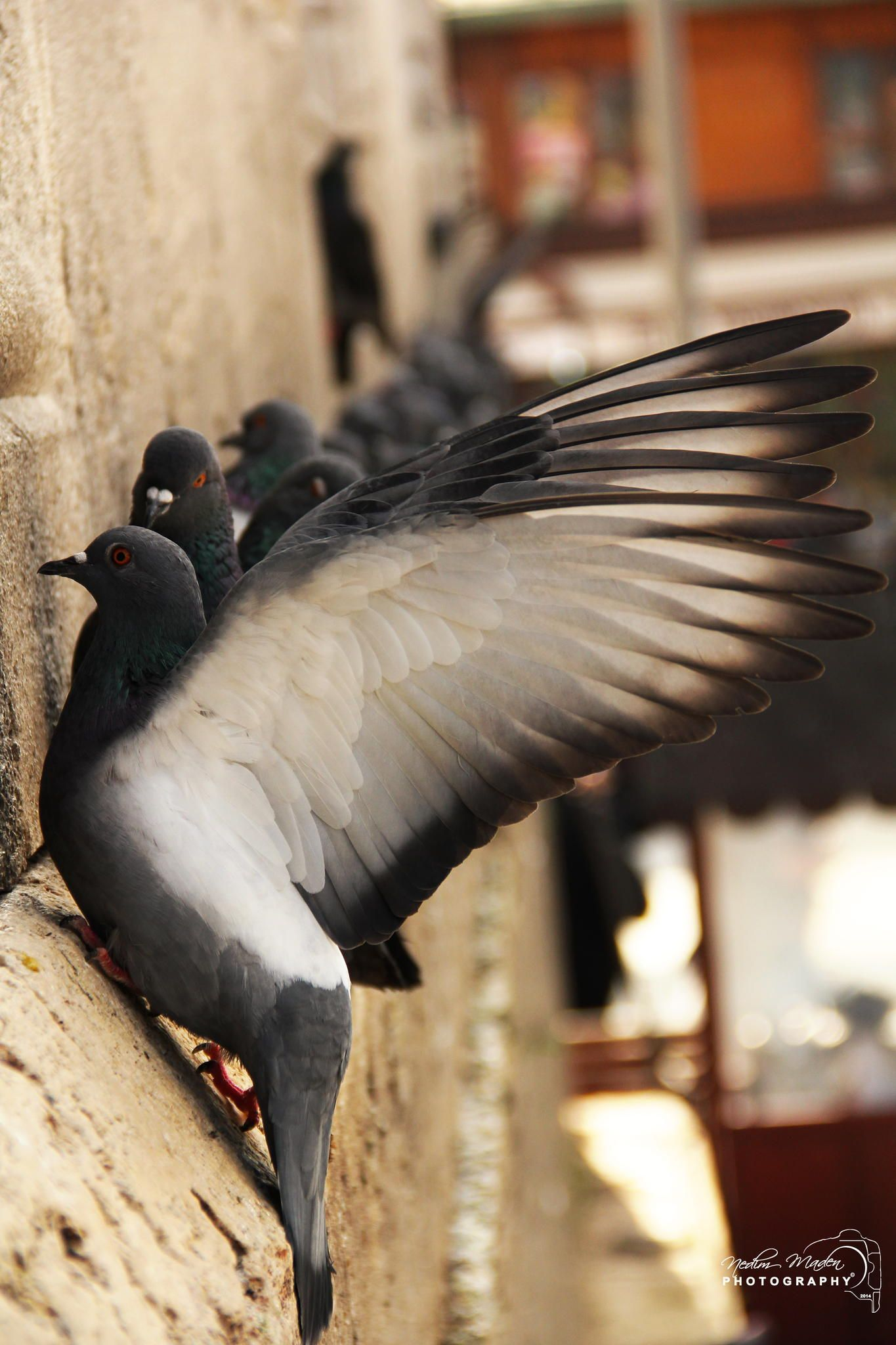 Bird by Nedim Maden on 500px