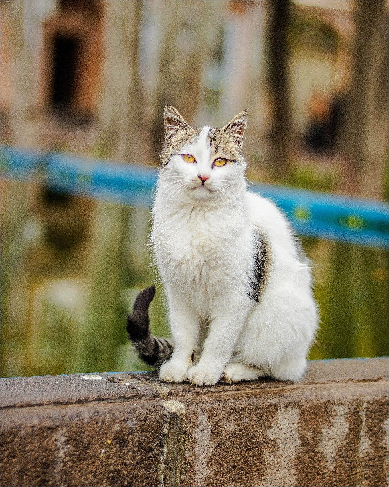 Cat Eyes Image Cat Animal Pet Kitten Cute Nature Eyes