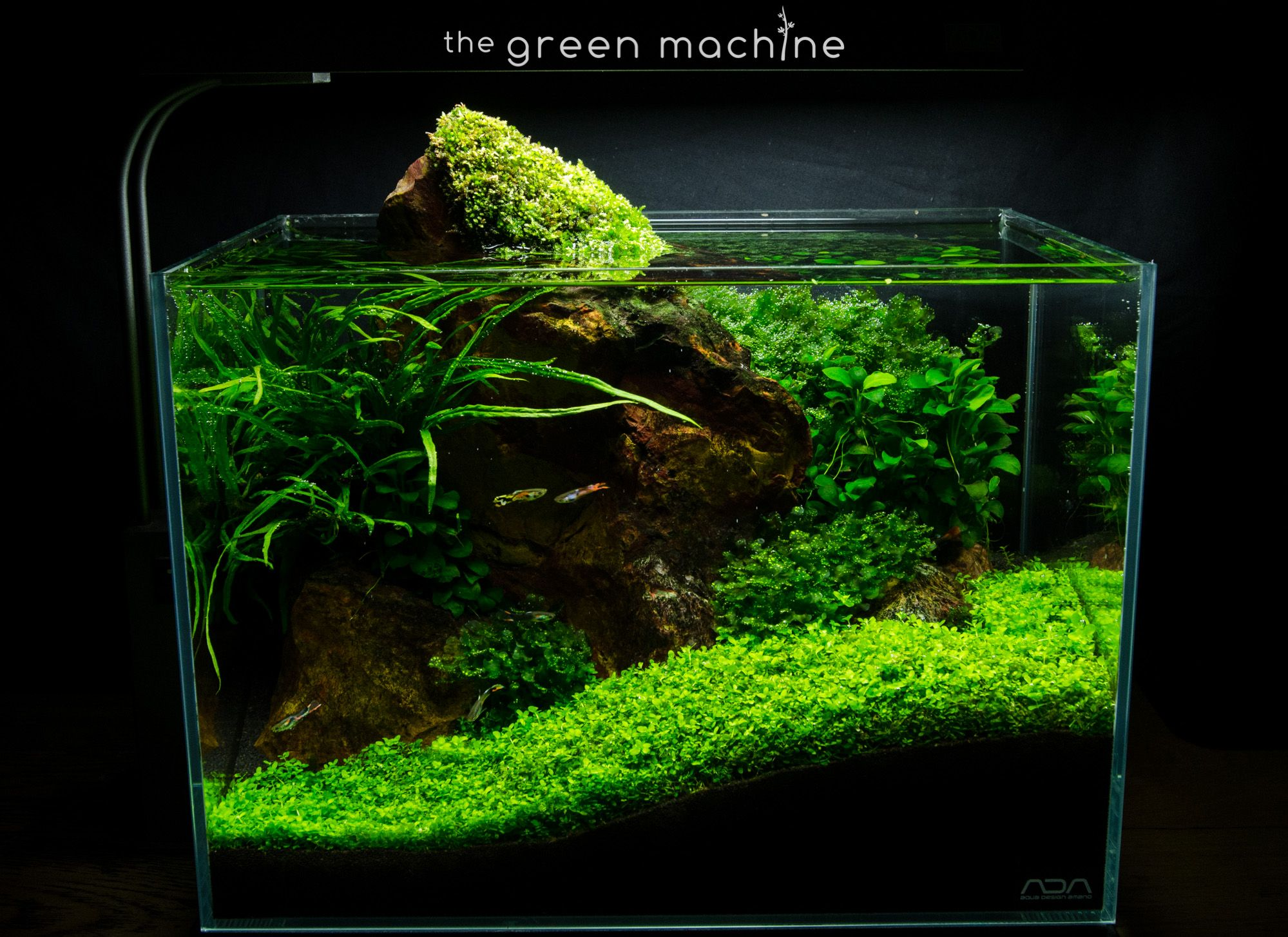 Red Rock Aquascape by James Findley for The Green Machine