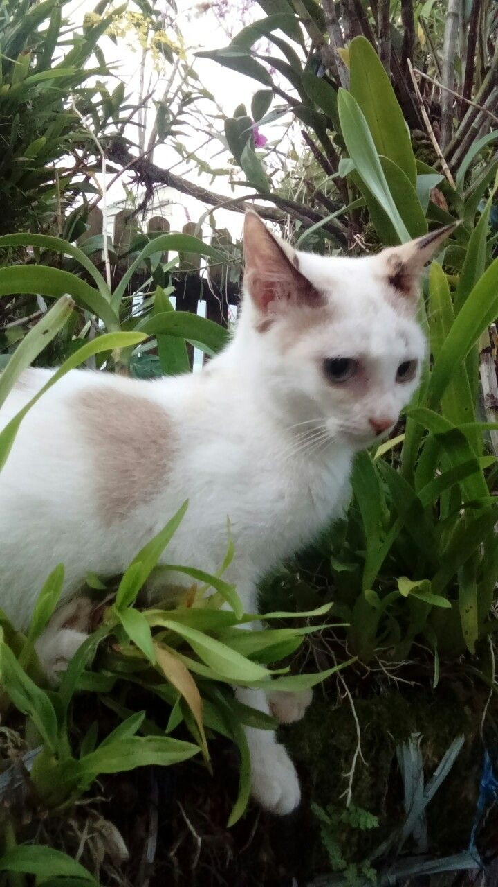 She likes climbing Ninius ochidus pole Kitty Cats Pinterest