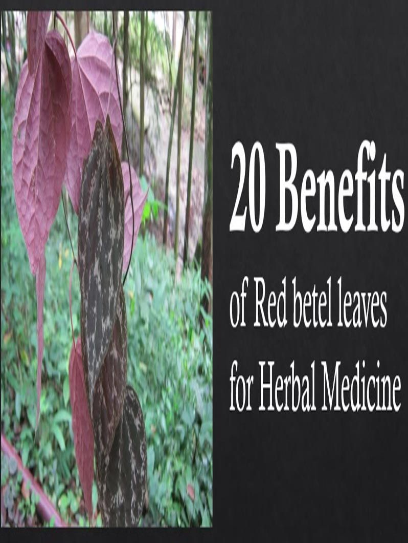 23 Amazing Medicinal Uses Of Betel Leaf (Paan Ka Patta) 23 Amazing Medicinal Uses Of Betel Leaf (Paan Ka Patta) new pictures