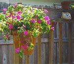 Hang pots on exterior or interior walls.