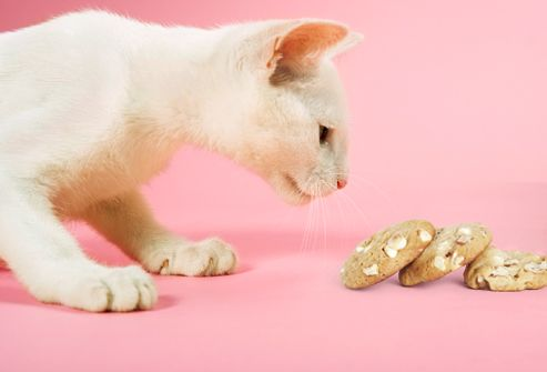 Foods Your Cat Should Never Eat Cat Care Cat Facts Cat Today