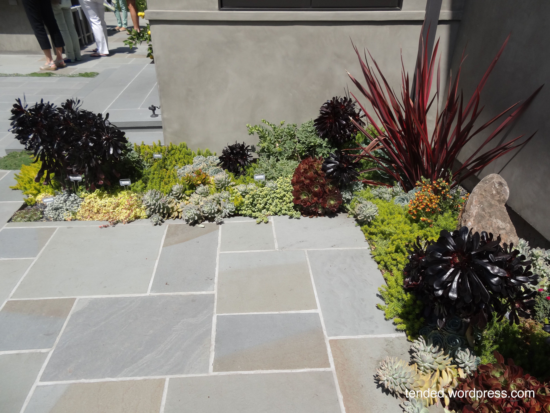 Succulent Yard Designs | Succulent Garden Ideas: Mixed Succulent Beds In A  Modern Garden