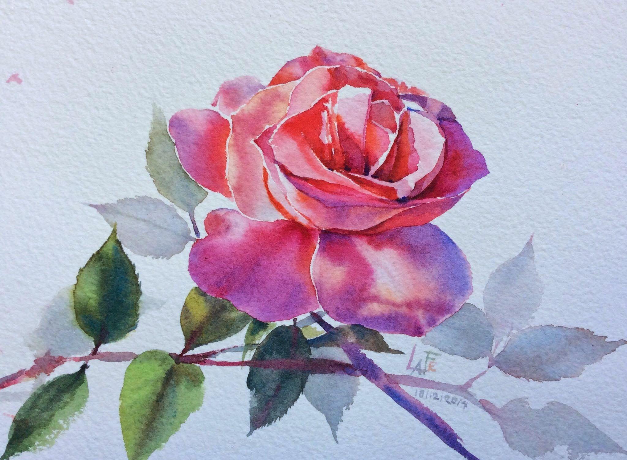 Роза акварель картинка