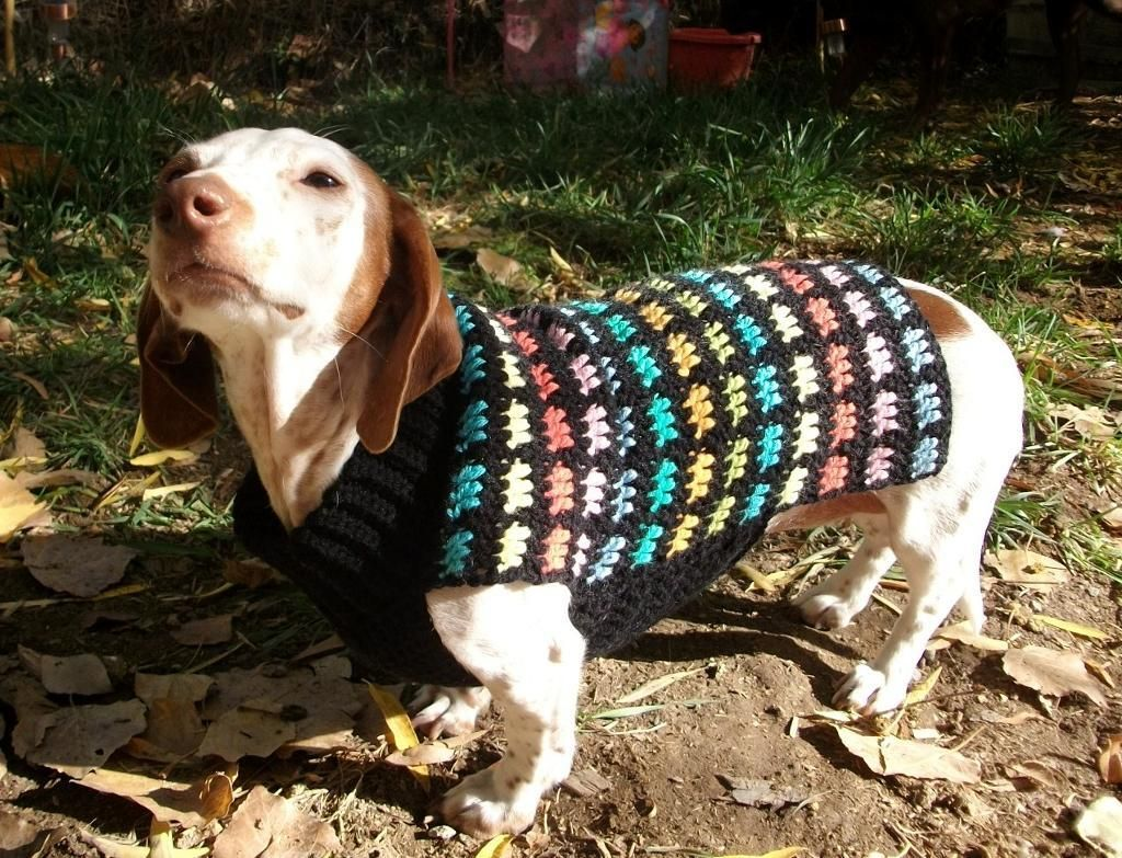 Stained Glass Crochet Dog Sweater | Dackel, Hunde und Häkeln