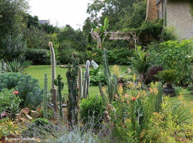 6 belles plantes exotiques qui poussent en bretagne for Plante exotique jardin
