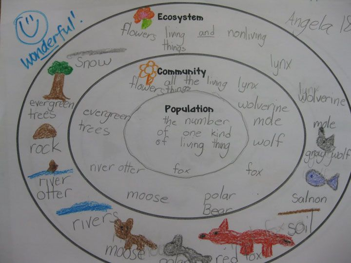 ecosystem community and population concentric circle map would rh pinterest com diagram of the everglades ecosystem food web ecosystem food chain diagram