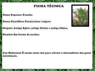 Plantas Medicinais - Os Incríveis: Funcho por Maria Paula Andrade