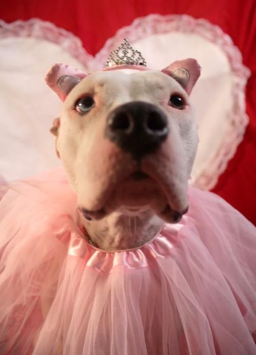 Omg Pitbull Princess At The Nyc Aspca Pets Dog Lady Nanny Dog