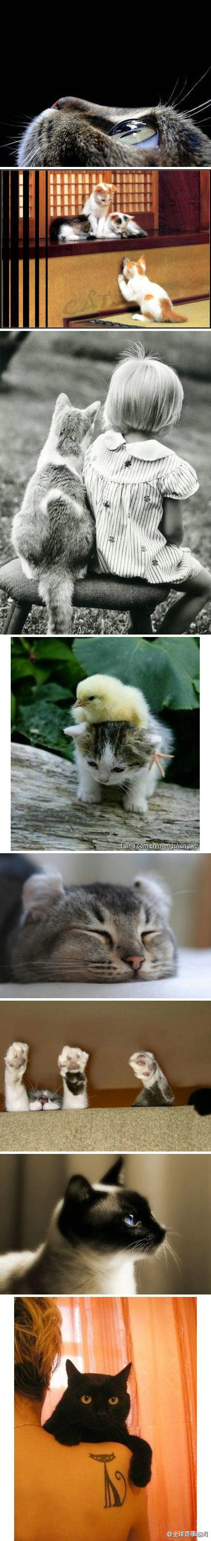 kittiessssssss