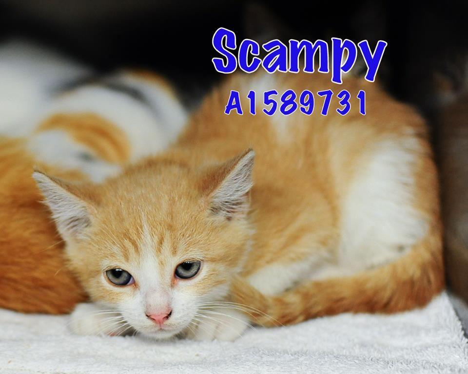 Tulip's baby Scampy Pompano Beach Adoption Center 3100 NW