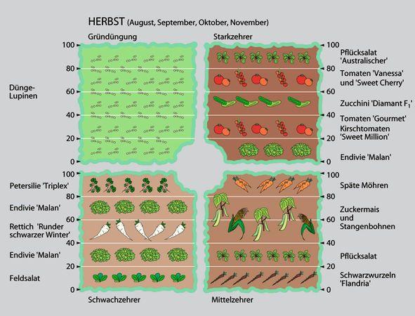 mit fruchtwechsel zu mehr erfolg im gemüsegarten | februar 2013 ... - Gemusegarten Anlegen Pflanzplan