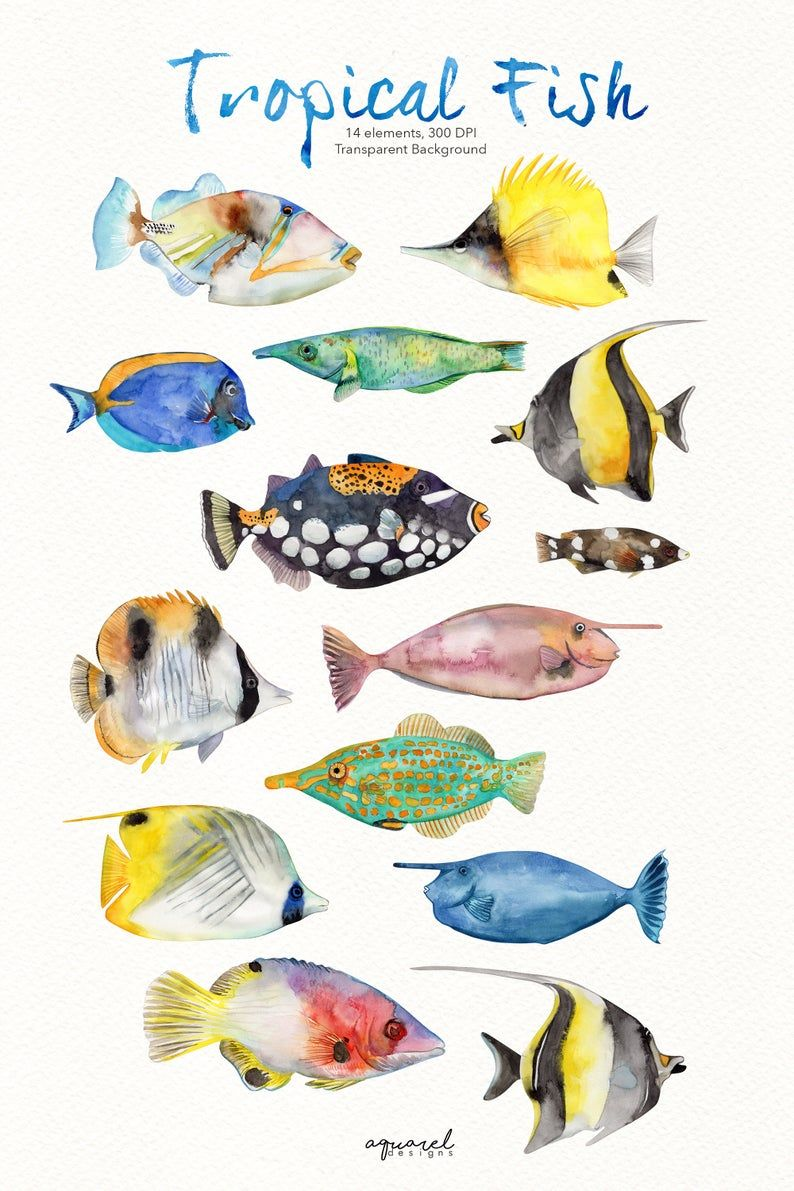 Watercolor Tropical Fish Clipart Colorful Fish Clipart Reef