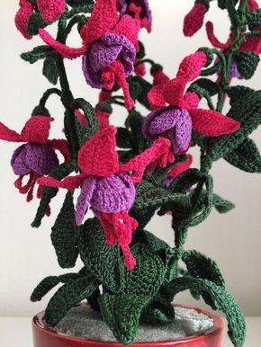 fucsia una pianta ornamentale con dei fiori molto