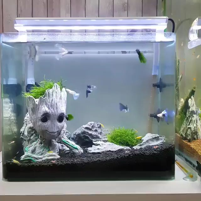 Guppy Fish With Groot From Guardian Galaxy In Nano Tank Funny Animals Guppy Fish Amazing Aquariums Cool Fish Tanks