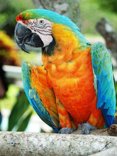 Pin By Brandon Cakes On Birds Tropical Birds Parrot Pet Birds