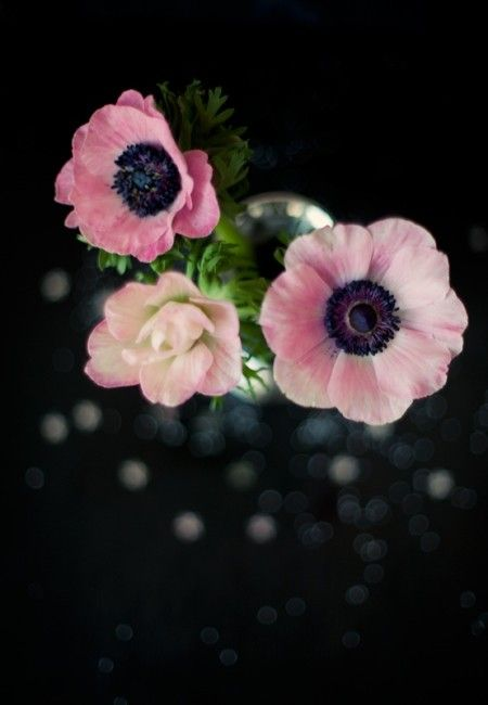 Pink flowers on black background color inspiration pinterest pink flowers with black centers bing images mightylinksfo