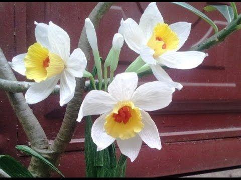 (7) DIY - craft tutorial How to make Paper flower - Narcissus - Làm hoa thủy tiên giấy nhún - YouTube