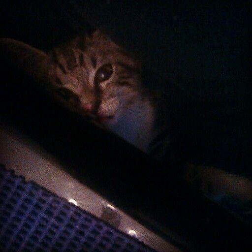 My kitten, Ozzi, calm for a change.