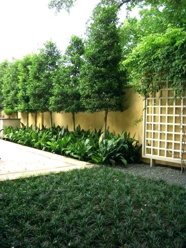 best privacy trees for small backyard best backyard trees ...