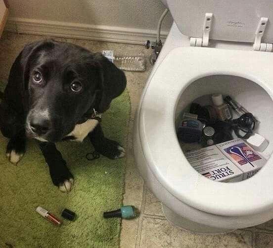 mamainzínea, achei que suas coisíneas estavam muito sujas e coloquei pra lavar