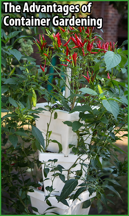 Learn why container gardening is a great option for growing your own food! #UrbanFarm