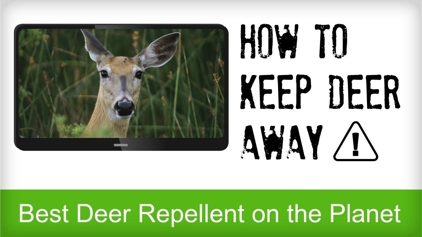 Best Deer Repellent Reviews Natural Recipe For Repelling Deer Animal Control Deer Repellant Deer Outdoor Gardens